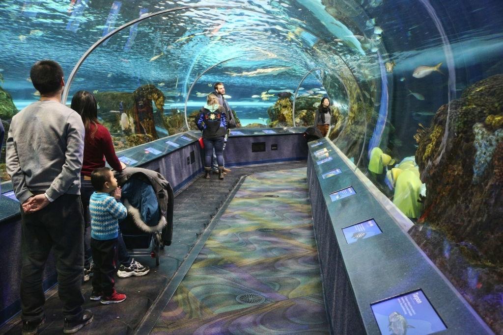 things to do toronto aquarium